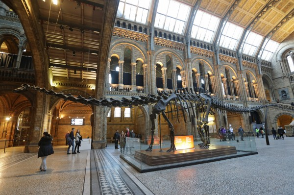 dippy on display in the natural history museum (Yui Mok/PA)