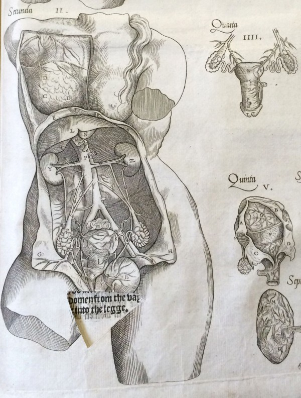 This 16th Century Anatomy Book Shows What We May Have Thought About