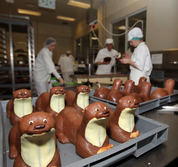Chocolate otters being made at Bettys