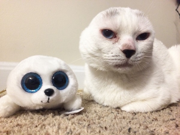 cat poses next to a stuffed seal (Molly Lichtenwalner/PA)