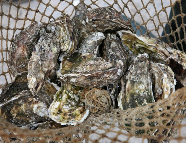 An Oyster Festival in Whistable