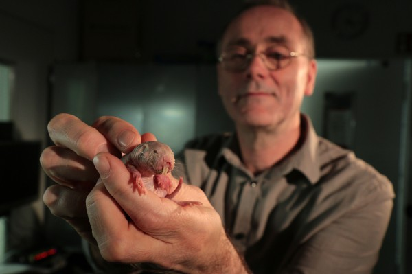 A man with a mole rat