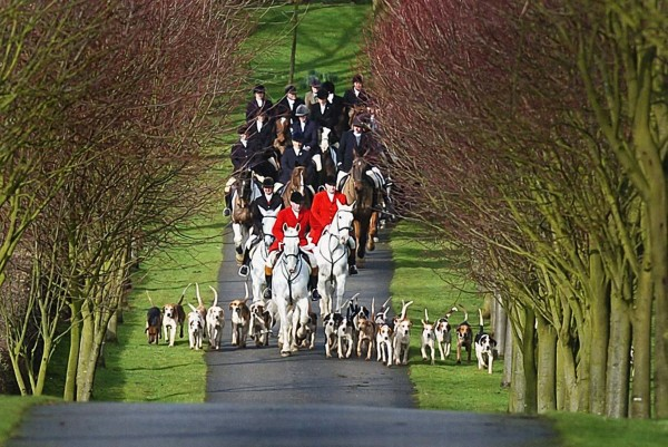 Hounds of the Bilsdale Hunt, the oldest Foxhunt in the Country dating back to 1658 during their meet.