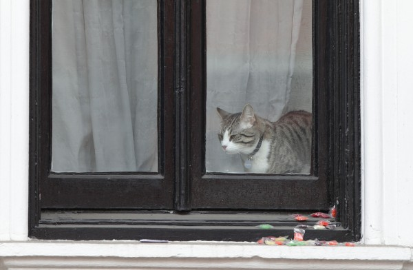 A cat, belieievd to belong to Julian Assange.