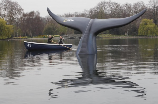 A Blue Whale tail model