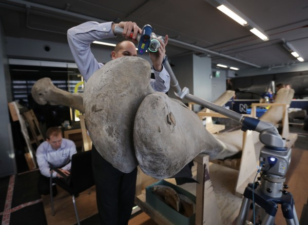 Blue whale bones analysed