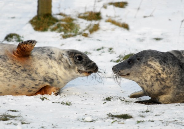 Seals.