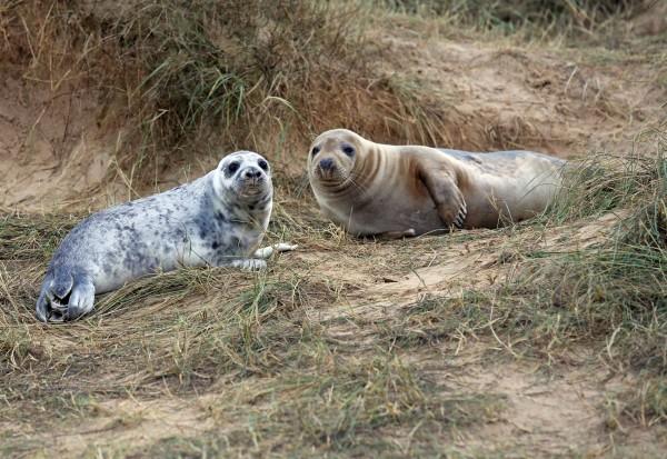 Seal pups.