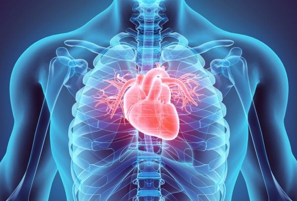 Statins may improve heart structure, function