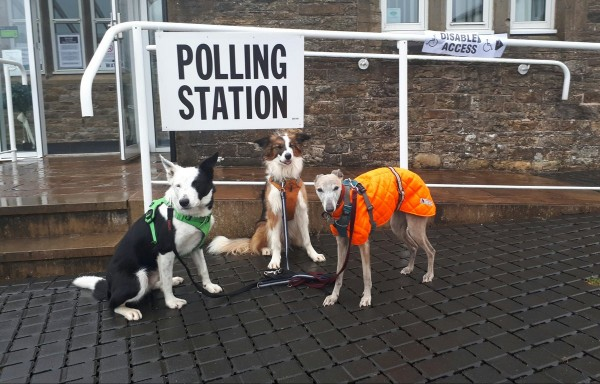 three dogs at polling stations (Katie Clarke)