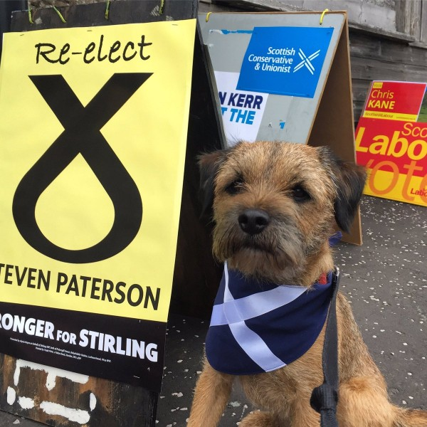 dog with scottish flag outside polling station (@RokAndWag)