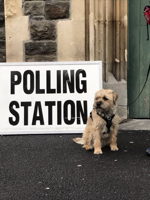 dog at polling station (@joesteph)