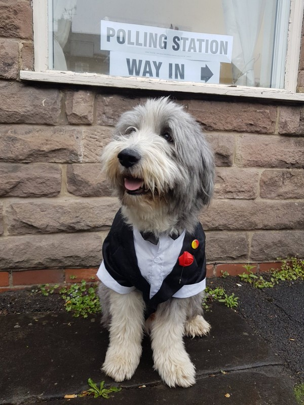 the dog outside polling station sign (Sophie Barkerwood)