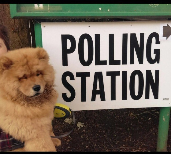 fluffy dog at polling station (Emma Buchanan)