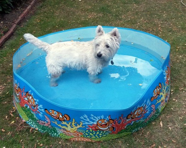 a dog cools off in a paddling pool (Martin Keene/PA)