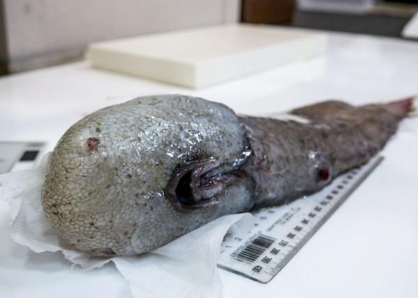 Faceless Fish.